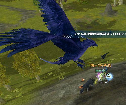 鳥葬・・・w